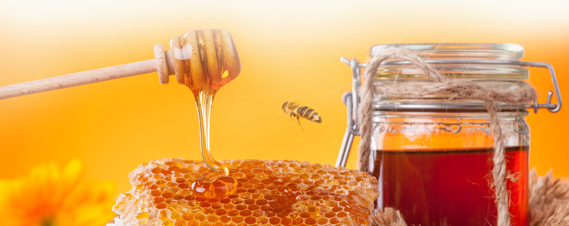 العسل لعلاج السرطان
